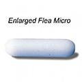 """Micro - Flea (Less Than 1/2"""")"""